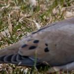 dove-paths-thumb