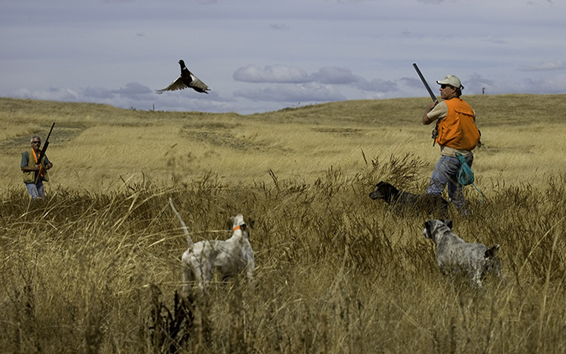How to Get into Upland Hunting: The Basics | The Blog of ...