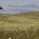 upland-hunting-thumb