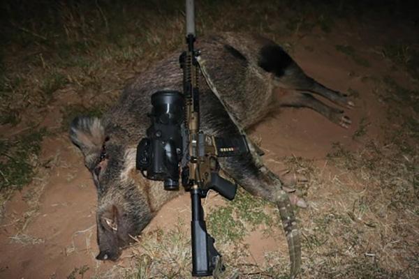 hog-hunting-1