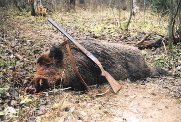 hog-hunting-3