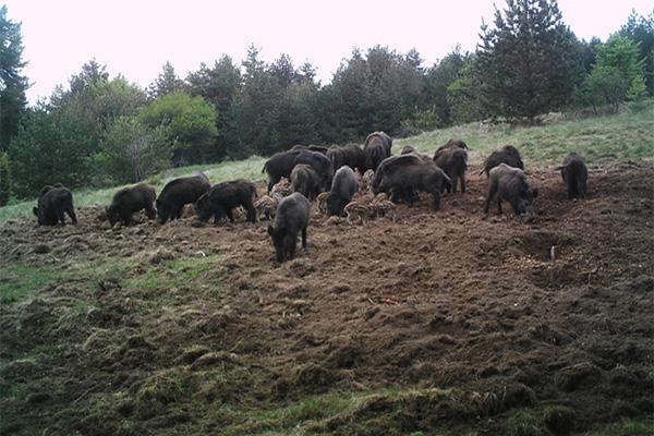 hog-hunting-5