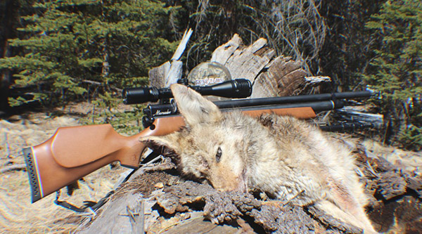 Hunting-With-Airguns-2