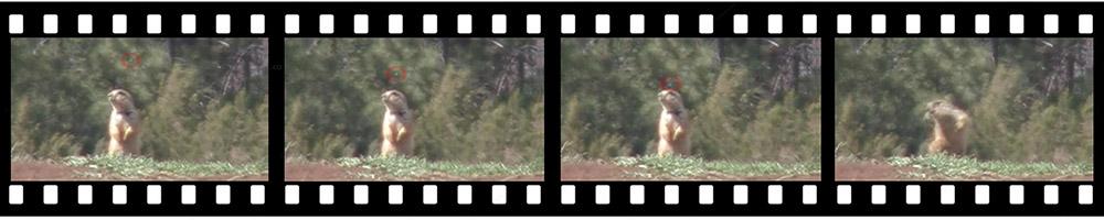 FilmStrip1000x200