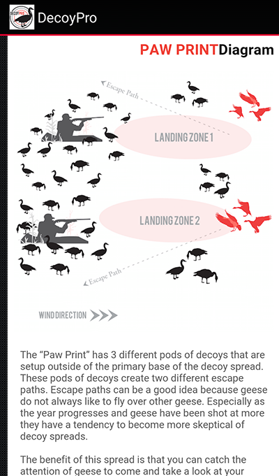Paw-Print-Diagram