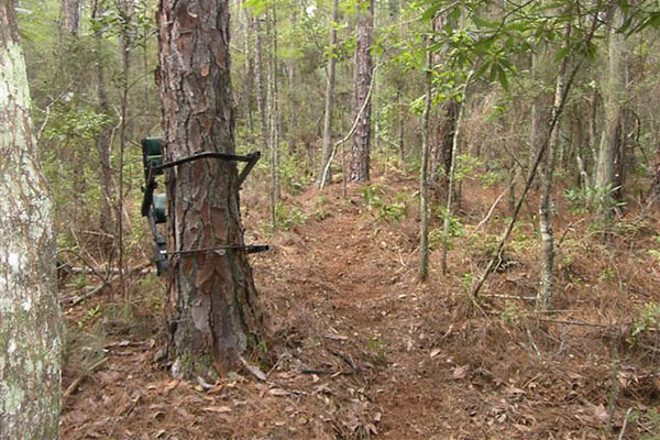 Where To Place Your Tree Stand