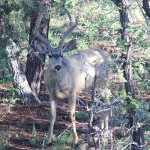 mule-deer-profile-thumb