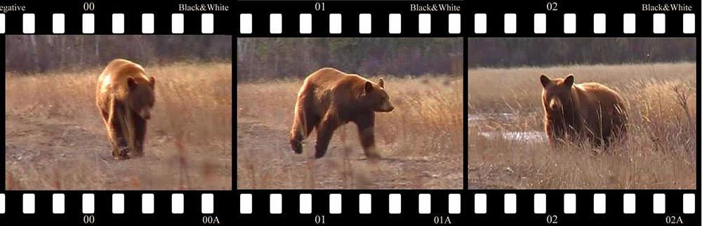 black-bear-6