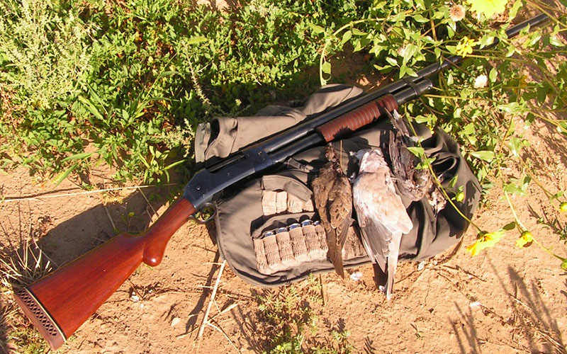 dove-hunting-gear-1