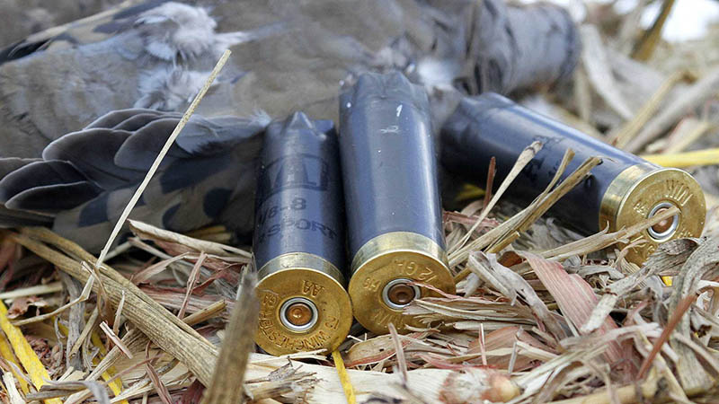 dove-shotguns-shells-4