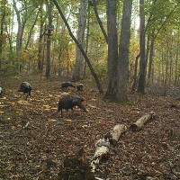 Scouting Turkeys