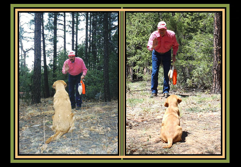 dog-training-basics-6