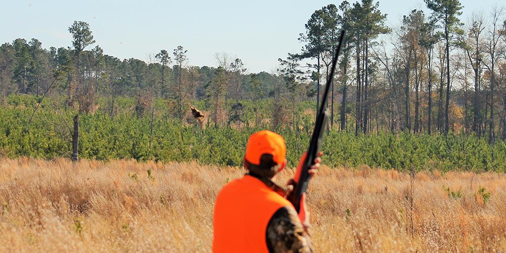 southern-quail-1