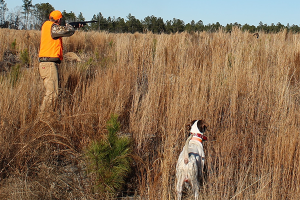 Hunting Southern Quail – Shotguns, Dogs And Mr. Bob